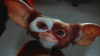 Gizmo.png