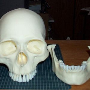 human size skull pieces