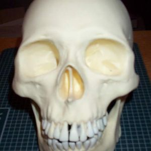 human size skull front